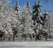 http://mgafk.ru/content/pages/307/images/p1c5lfsq1hv6q46g1n4f1sc11rua3.jpg